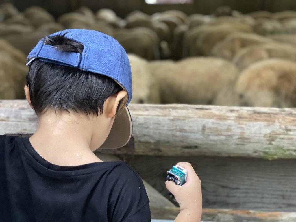 六甲山牧場|長男とひつじさん